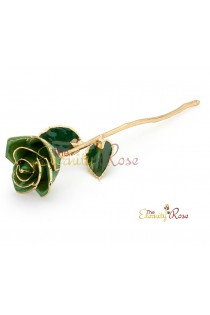 dark green rose